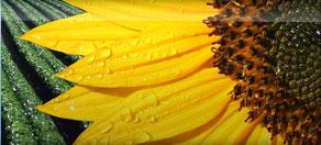 вискозиметр для биотоплива